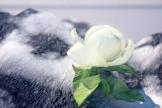 她被称为在边疆绽放的江苏雪莲花