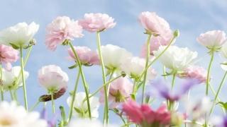 【春花烂漫踏青时】小心过敏性鼻炎影响好心情哟